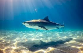 Why are sharks important?